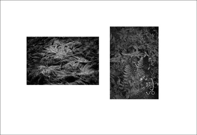 Snake Skeleton, Grasses