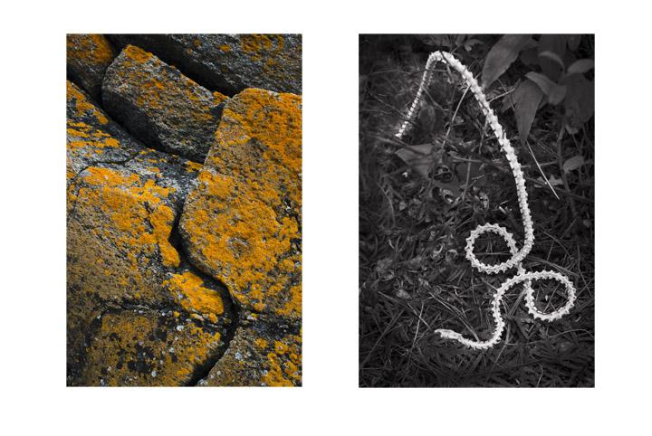 Snake Skeleton, Yellow Rock
