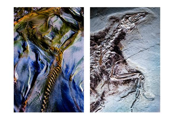 Bird Fossil, Fractal